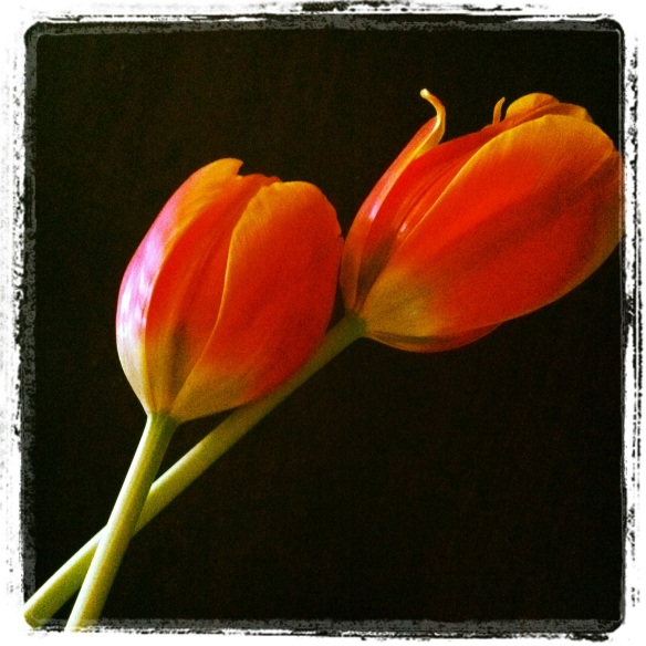 tulips on my table 2 by Katariina Fagering