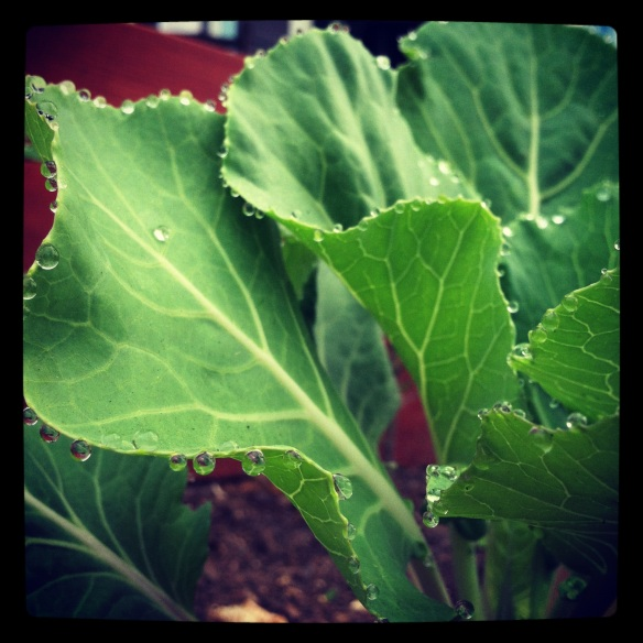 morning kale by Katariina Fagering