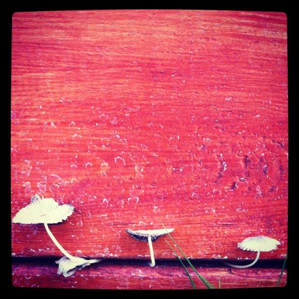 mushrooms katariina FAgering