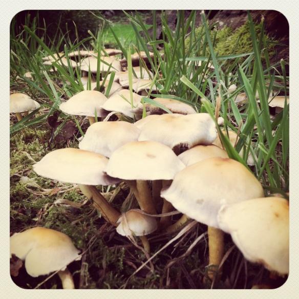 Fungus at Croydon Hall