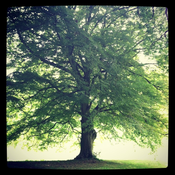 Just one of the majestic trees gracing Croydon Hall