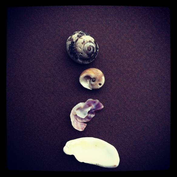 carlsbad shells by Katariina FAgering