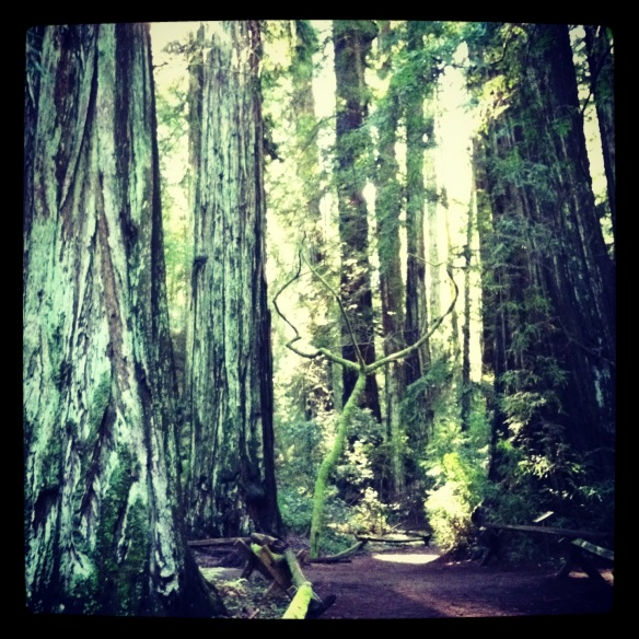 Armstrong Forest, Guerneville