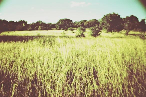 Fischer land