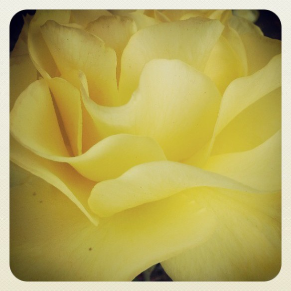 rose garden by Katariina Fagering