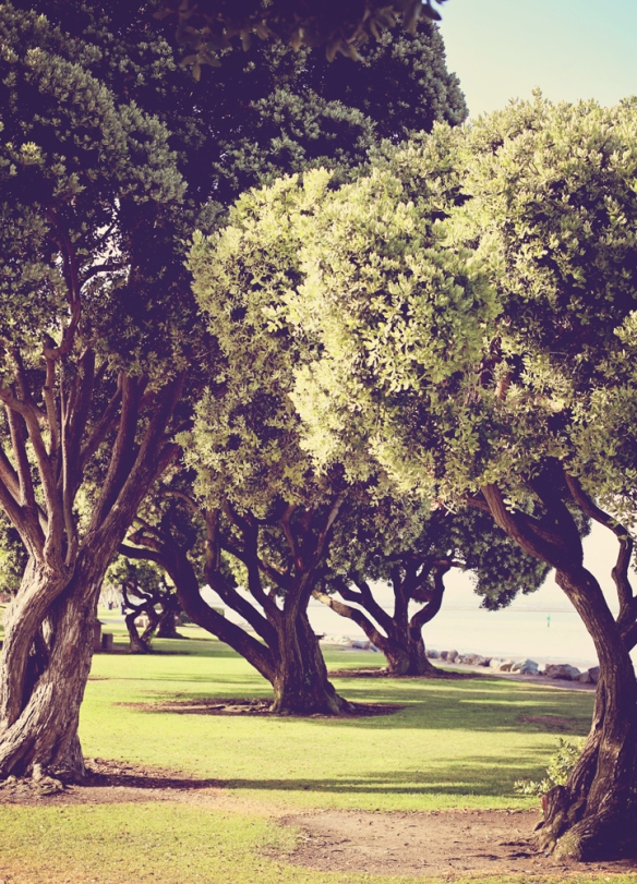 trees in chula vista by Katariina Fagering