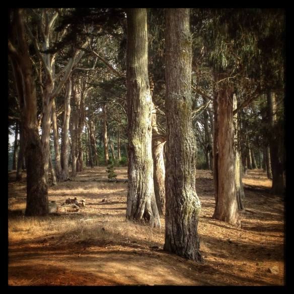 golden gate park by Katariina Fagering
