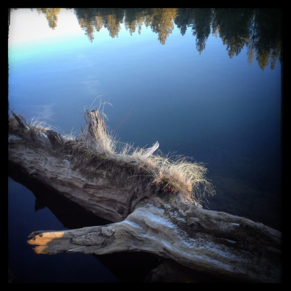 river log in deschutes river bank by Katariina Fagering