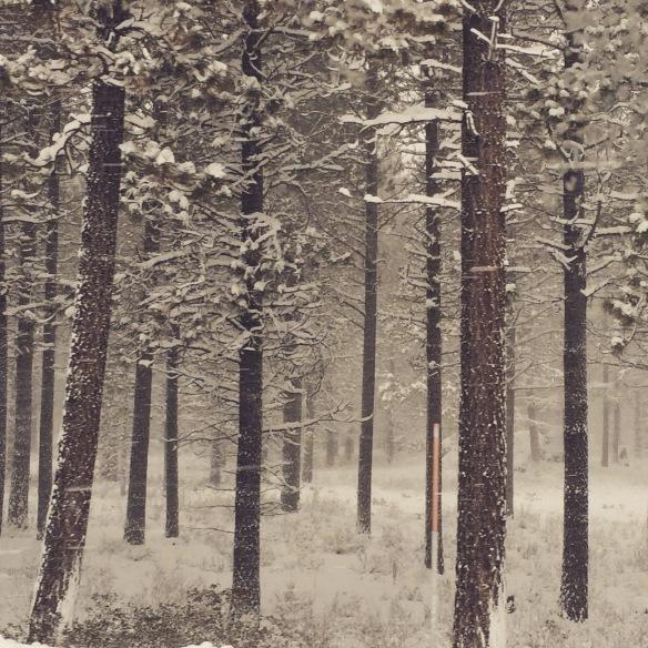 ponderosa snow